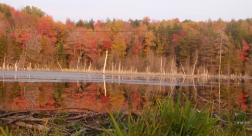 Fall foliage beaver pond