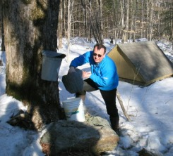 Gathering sap at the maple tree