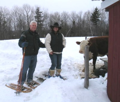 Winter snowshoers visit the cows.